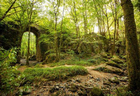 La forêt de Mervent et ses secrets