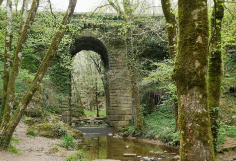 Pont de Diet à Mervent en forêt