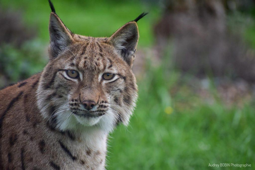 Natur'zoo de Mervent en Vendée