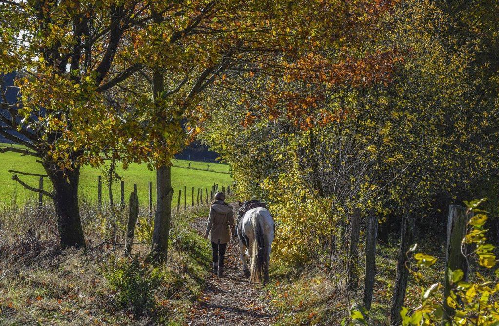 woman, horse, trail