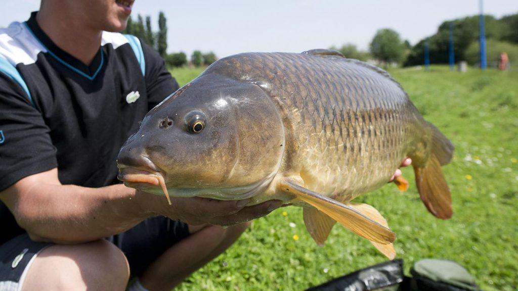 Pêche à Mervent